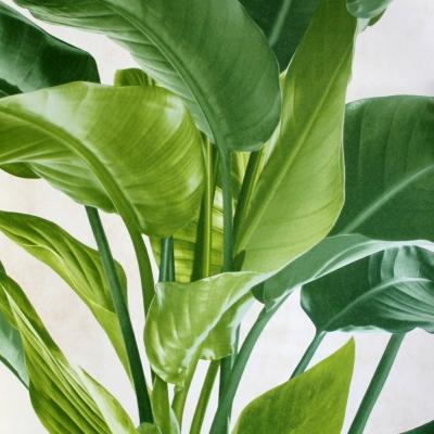 Carta da parati grandi foglie verdi